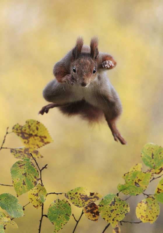 13 Funny Winners Of The 2015 Comedy Wildlife Photography Awards